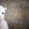 2大スターが園の北端と南端で待つ『長野市茶臼山動物園』