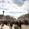 映画の予約→公園の桜→動物園→ボート