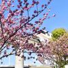 桜の門のようです