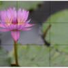 カメラの考察 ~「間」で考える、写真の三分割構図や日の丸構図~
