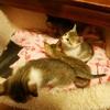 子猫ーズが来た時の先住猫達