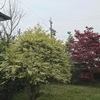 春の花 木々
