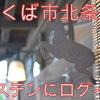 【郵便局カフェ】北条のとある建物に恋をした店主!?地産地消の食材お教えします!!【ポステン】