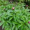 新緑の庭にひよどりや揚羽が訪れる