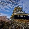 桜が少しだけ散り始めた浜松城を散歩してみた
