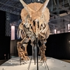 恐竜科学博に行ってきました!