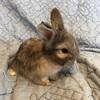 4週目の赤ちゃんと子ウサギのヘアカット