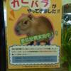京都市動物園の新かぴ