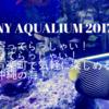 心は沖縄の海へ!!ソニーアクアリウム2017が超オススメ!