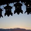 2020年1月 奈良ひとり旅2日目〜新薬師寺と夕暮れの二月堂