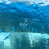 サンシャイン水族館の天空のペンギンは超必見!新エリア「マリンガーデン」を最速解説!