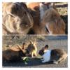 ウサギとロマン