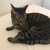 【猫】ハマグリのイカ耳コレクション 2019 S/S