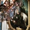 ようやく見つけたパリ本場のB級スポット、死臭と耽美の猟奇の館、自然狩猟博物館