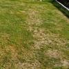 草取りと芝刈り