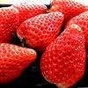 イチゴ狩りでイチゴ可愛い!と、いってもいいですか?イチゴのもつ栄養を模索。