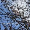桜ウォーキング♪ちいさな春をさがす旅