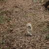 EOS R5 森で走るわんこの瞳AFテスト-その1-