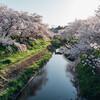 桜 2020 Vol.5