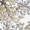 【体調を整え】春を満喫しよう!
