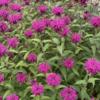 ☆花 たいまつそう カンパニュラ 紫陽花 栗の花 & 猫