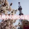 札幌中心部から歩いて行ける桜の名所