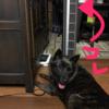 甲斐犬サンの今年のお気に入り〜 (〃´∀`〃)♡だいしゅき♡