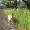 突発性網膜変性症、乳がん、転移性肺がん…うちの犬の病気。
