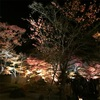 円通院の紅葉ライトアップ