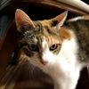 我が家の猫人生・・・