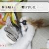 猫の道具 ~すずめのお誕生日プレゼント~