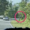 カオヤイで野生の象に遭遇 @カオヤイ国立公園