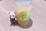 真鯛カツバーガーに会えなかったがハニーレモンソーダに会えた。