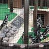 神戸はスマスイ。神戸市立須磨海浜水族館でイルカショーとラッコのお食事ライブとペンギンのお散歩。
