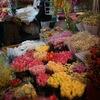 ハノイで心地よい場所「QUANG AN FLOWERS MARKET」