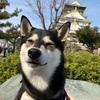 【必殺・石垣ぴょんぴょん】梅の季節だ!いざ大阪城へ