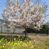 春の種まきと植え付け、園芸資材の調達など