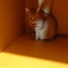 猫さんお誕生日、6歳になりました~☆