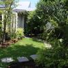 月下美人が咲きました 緑色濃いKUVの庭で