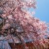 春の高尾山 新緑と花に癒されてきました
