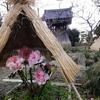 白鳳石仏と寒ぼたん園 1月限定御朱印あり 奈良・石光寺