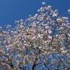 2020.04.19 春の彩やさと~ますみ公園