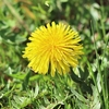 季節の花(令和三年四月 上)