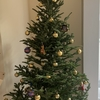 DAY249 [渡英226日] 2020年12月5日(土):日本労務学会の関東部会,クリスマスツリーの飾りつけ,The Anchor