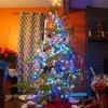 カナダのクリスマスツリー事情!!~山から切って自然に返る?!~