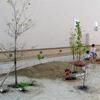 山砂整地と庭の改造