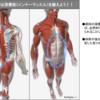 ランナーにおける深層筋(インナーマッスル)の重要性