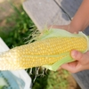 淡路ファームパーク イングランドの丘へ行って来ました!収穫体験で収穫したトウモロコシが美味しすぎて人生変わった。