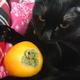 今日の黒猫モモ&白黒猫ナナの動画ー827