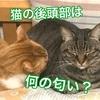 猫の後頭部の形と匂いが好きな理由?スイカの匂いする?